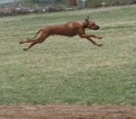 Angus shows speed