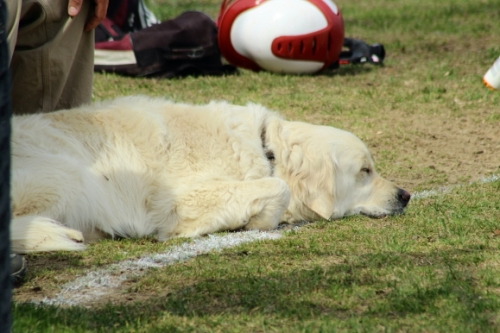 Augie relaxes between innings of the St. Marys/Amesbury softball game